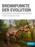 Brennpunkte der Evolution